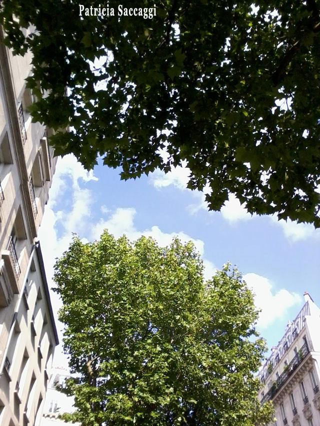 Photo du ciel Feuillus