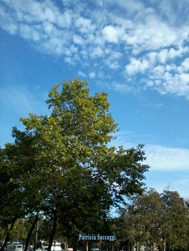 Photo du ciel Entre ciel et arbre