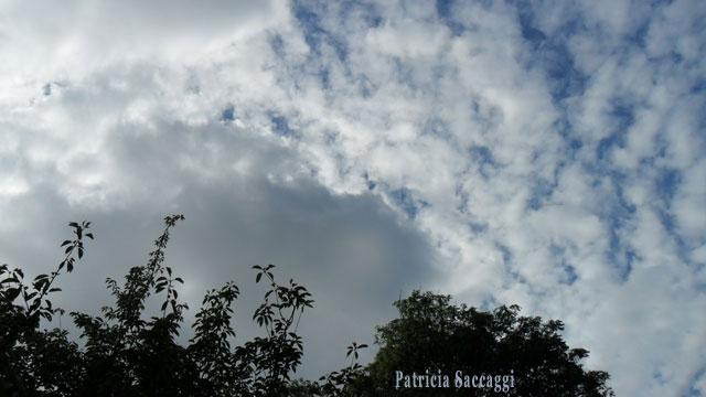 Photo entre ciel et arbres