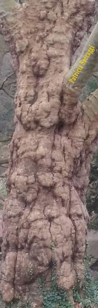 La beauté du tronc d'arbre