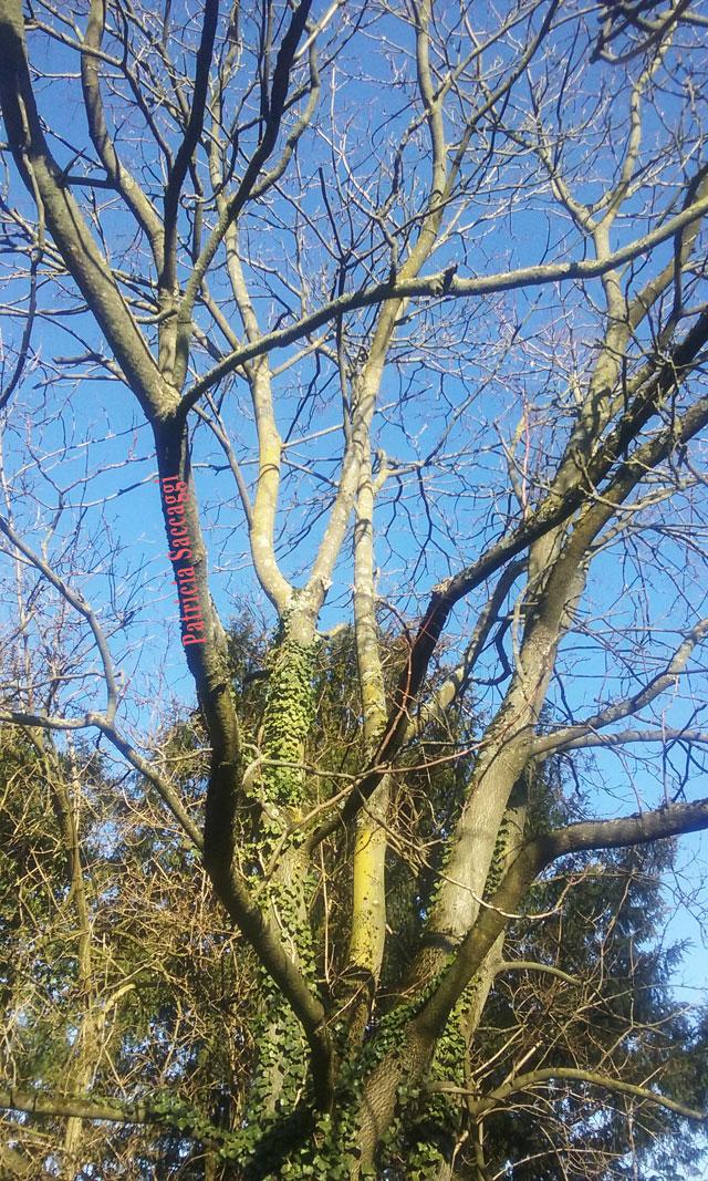 L'arbre que j'ai pris en photo au parc des Buttes-Chaumont.