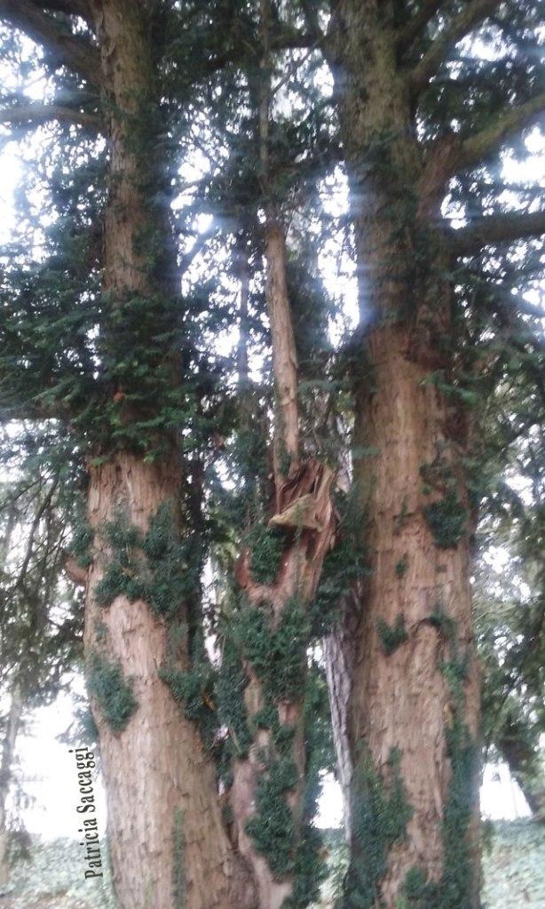 La beauté des troncs d'arbres