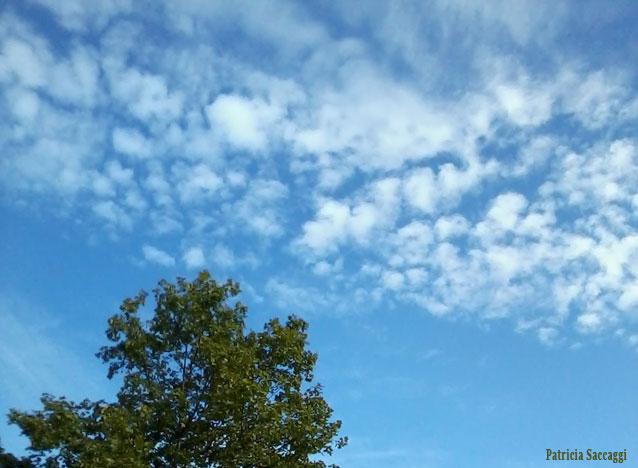 Le ciel parle aux feuilles