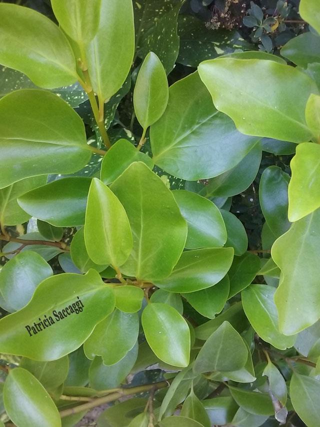Photo que j'ai prise d'une plante au parc des Buttes-Chaumont