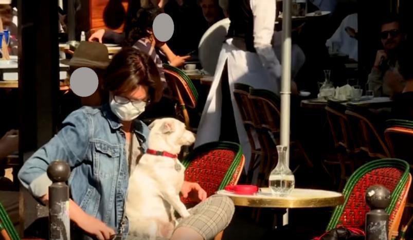 Photo trouvée sur le net, montrant une femme portant un masque, à la terrasse d'un café, son chien sur les genoux.