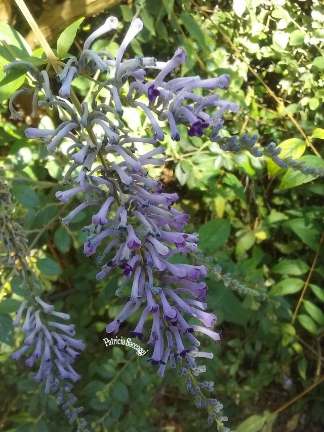 Photo de plante que j'ai faite au parc des Buttes-Chaumont