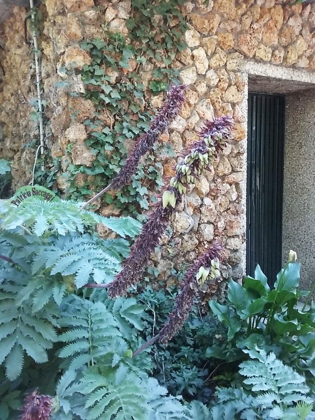 Photo de plante que j'ai prise au parc des Buttes-Chaumont