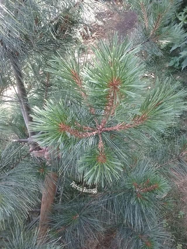 Photo de plante que j'ai prise au parc des parc des