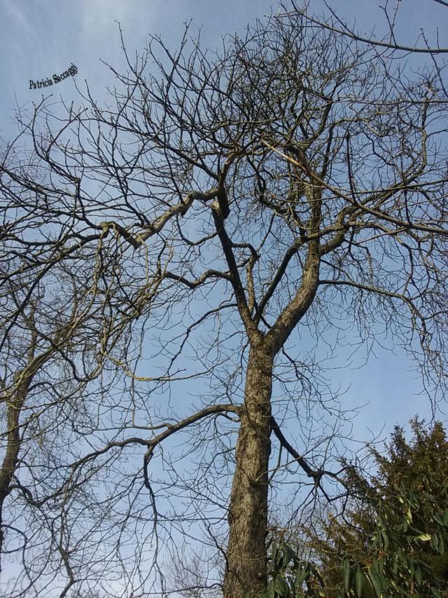 Photo que j'ai prise au parc des Buttes-Chaumont.