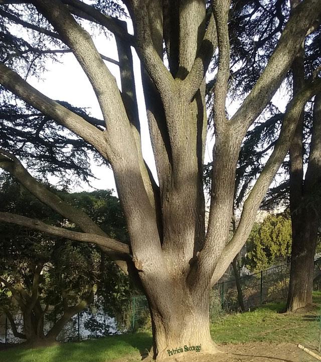 Photo d'arbre que j'ai prise au parc des Buttes-Chaumont.