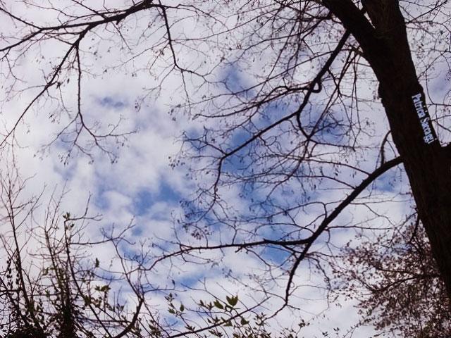 Photo d'arbre, que j'ai prise au parc des Buttes-Chaumont.