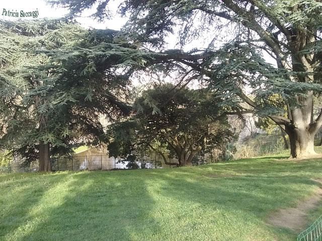 Photo d'arbres que j'ai prise au parc des Buttes-Chaumont.