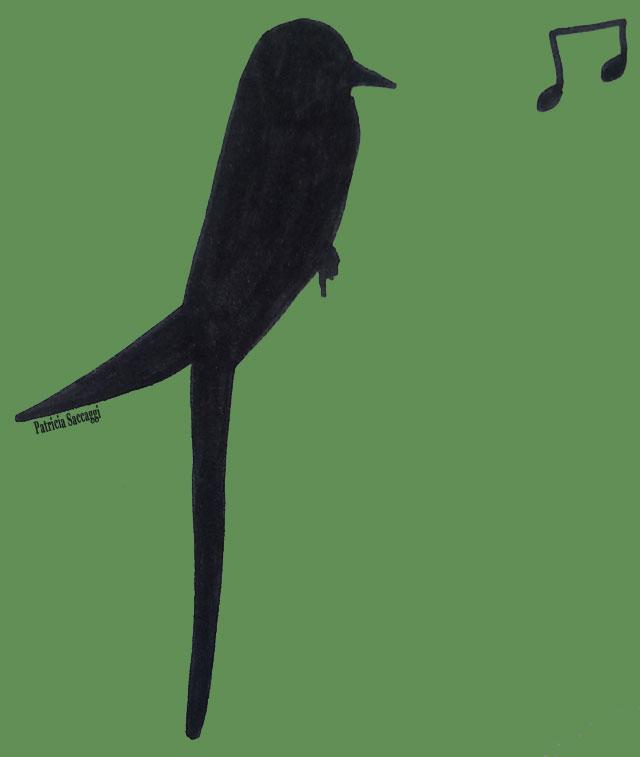 Esquisse d'oiseau que j'ai faite pour illustrer mon chant.