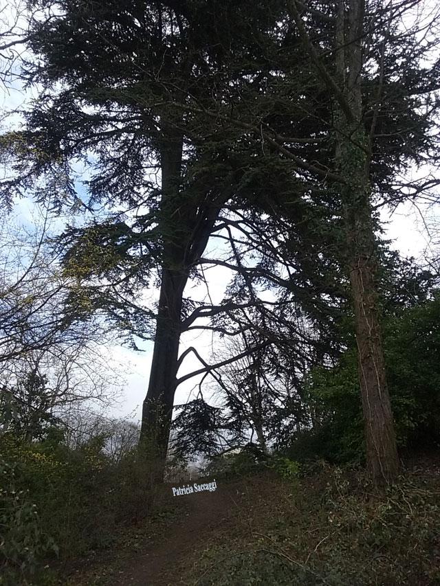 Photo d'arbre que j'ai prise dans le parc des Buttes-Chaumont.
