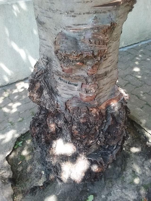 Photographie que j'ai prise du tronc d'un arbre.
