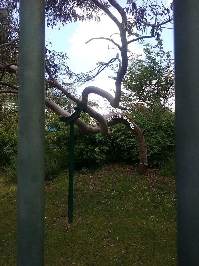 Photo que j'ai prise en passant devant une grille derrière laquelle se trouve un arbre aux branches biscornues.