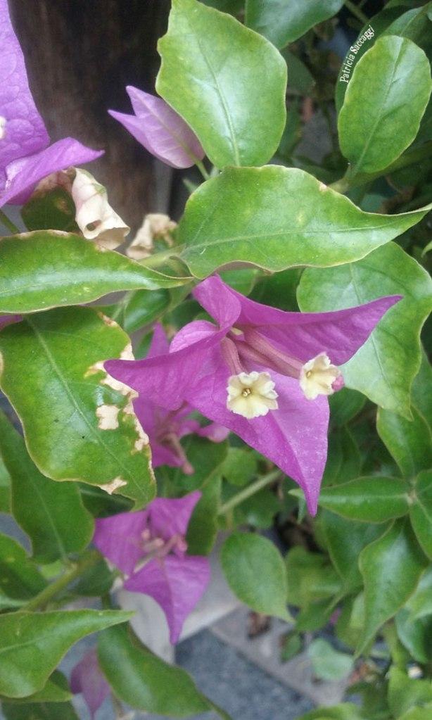 Photo que j'ai faite de fleurs parmi le feuillage.