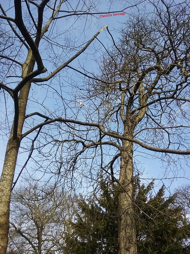 Photo d'arbres que j'ai faite dans le parc des Buttes-Chaumont car j'étais intriguée par l'objet blanc qui se trouve au milieu des branches, en hauteur.