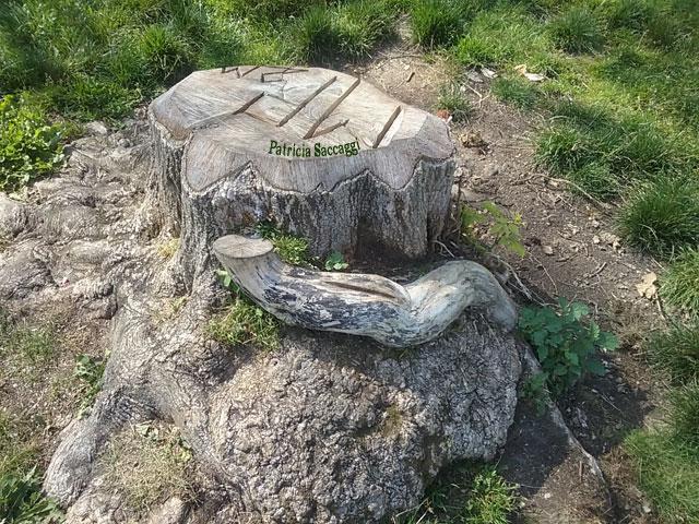 Photographie que j'ai faite dans le parc des Buttes-Chaumont parce que je trouve cette souche esthétique.