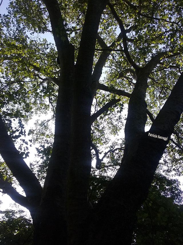 Photographie que j'ai faite sur la beauté d'un arbre.