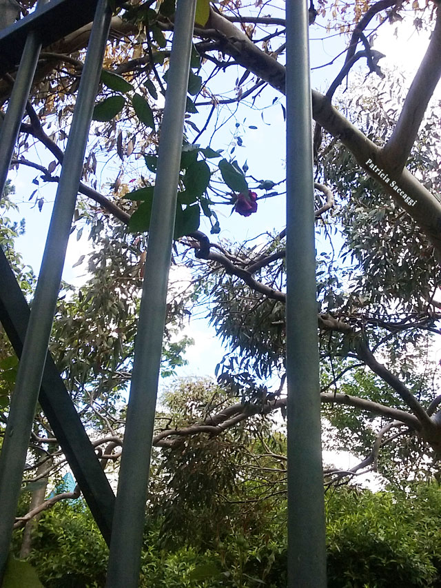 Photographie que j'ai faite d'un arbre derrière des barreaux.