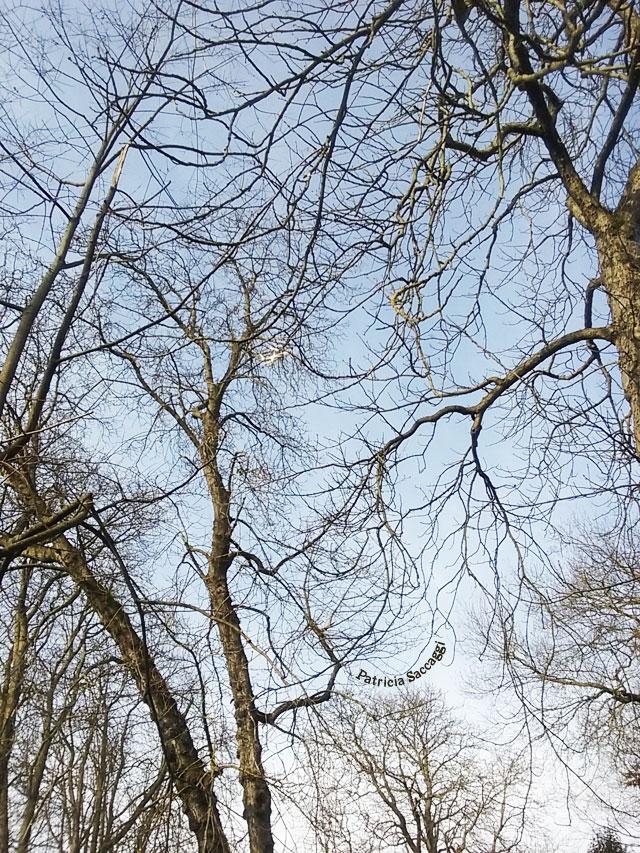 Photographie que j'ai prise parce que les branches délicates me font penser à la dentelle.