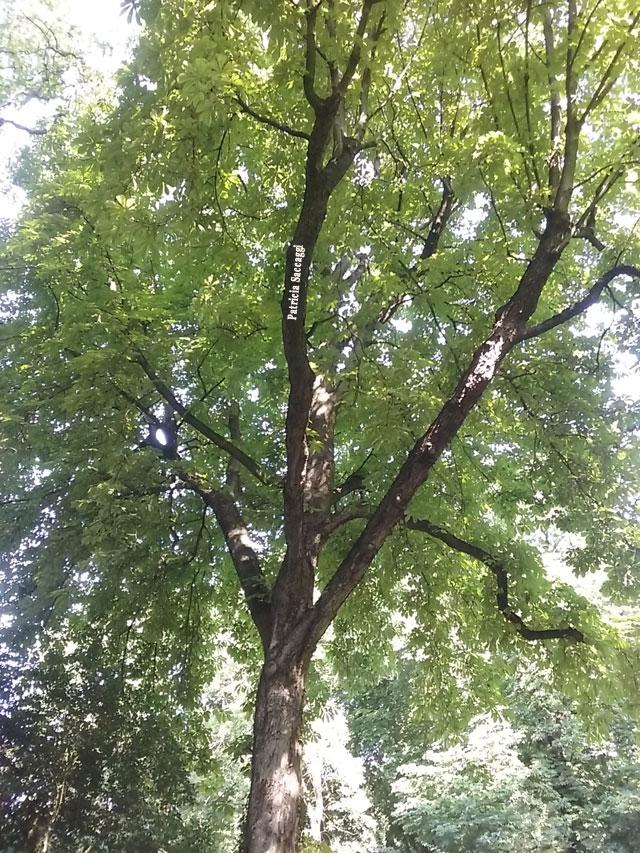 Photographie d'arbre que j'ai prise au parc des Buttes-Chaumont.