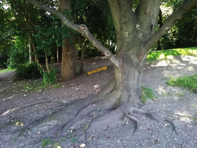 Photographie des fortes racines d'un arbre que j'ai faite au parc des Buttes-chaumont.