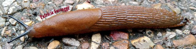 Photo d'une limace que j'ai faite au parc des Buttes-Chaumont.